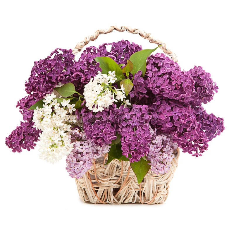 Spring bouquet. Lily of the valley and lilac in a basket isolate royalty free stock image