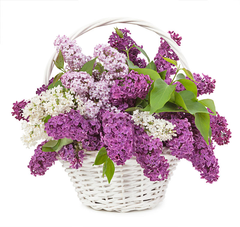 Spring bouquet. Lily of the valley and lilac in a basket isolate stock photo