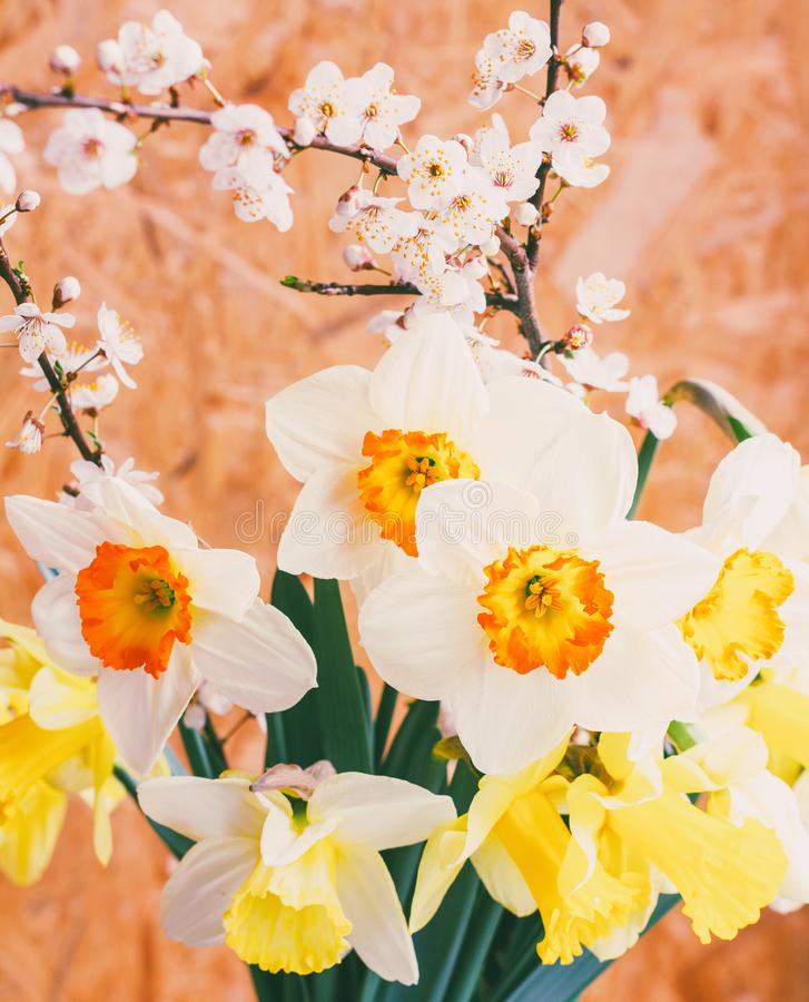 Spring bouquet of Narcissus flowers and flowering branches of a fruit tree royalty free stock image