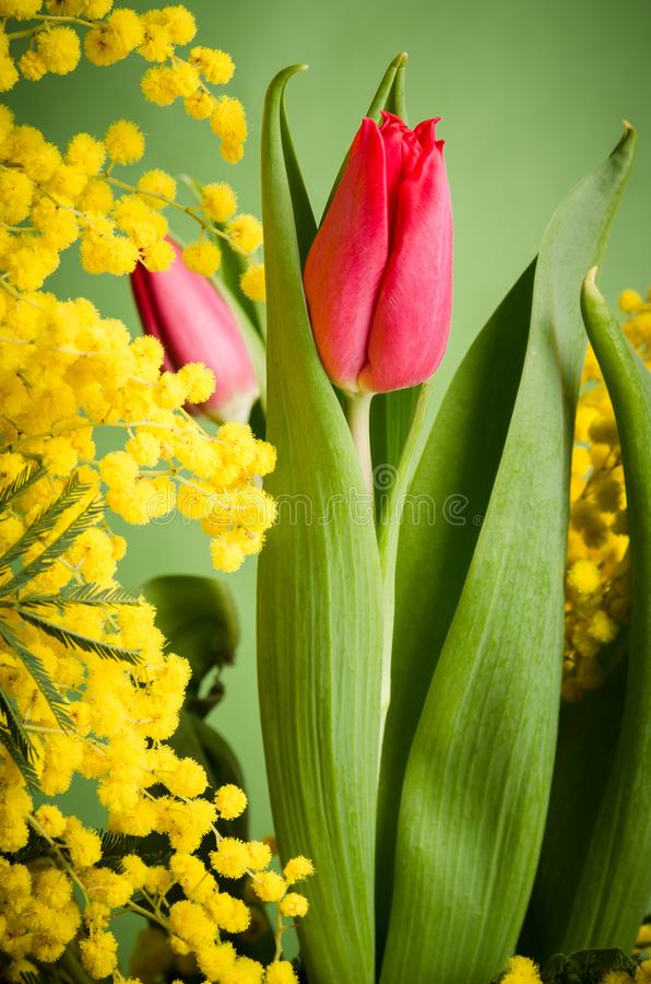 Spring bouquet with tulip and mimosa stock photography