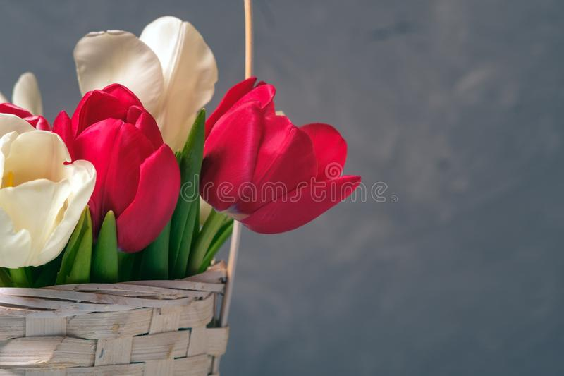 Spring bouquet of tulips in basket on vintage backdrop. Banner template with copyspace for Womans or Mother day, Easter, spring h stock image
