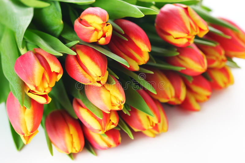 Download Spring Bouquet Tulips On White Background Stock Photo - Image: 23396574