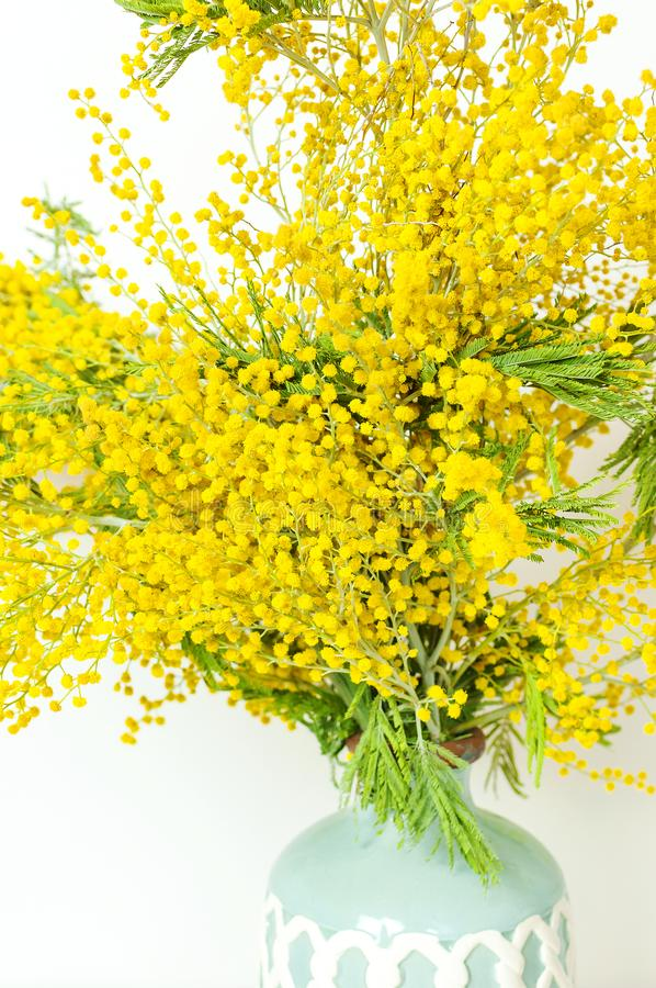 Spring bouquet of yellow mimosa flowers in turquoise vase against the light wall copy space. Gentle composition, concept of spring. Season, symbol of 8 March royalty free stock images