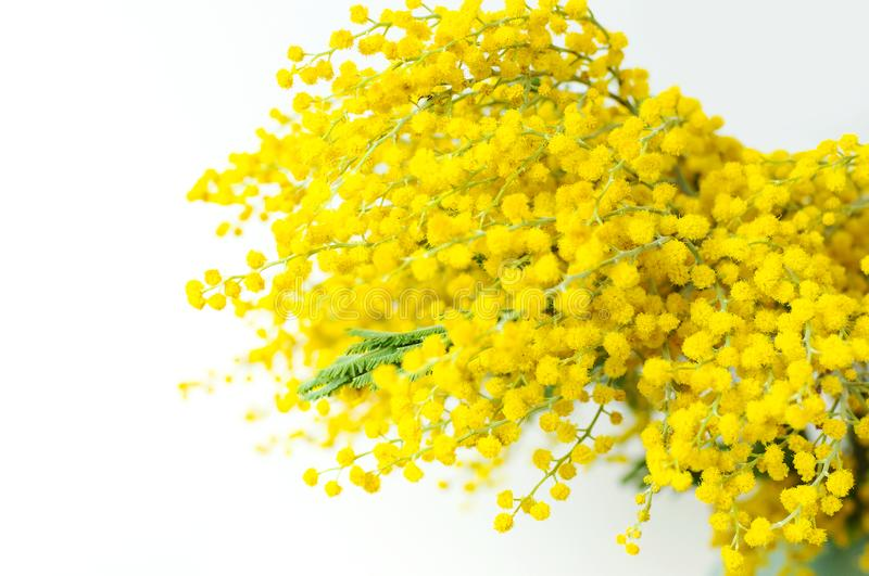 Spring bouquet of yellow mimosa flowers in turquoise vase against the light wall copy space. Gentle composition, concept of spring. Season, symbol of 8 March stock photo