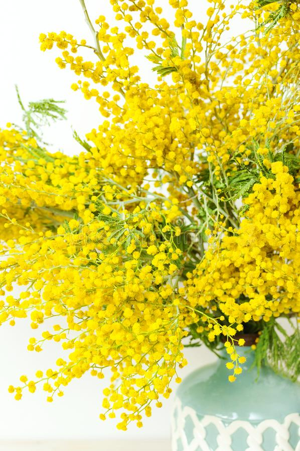 Spring bouquet of yellow mimosa flowers in turquoise vase against the light wall copy space. Gentle composition, concept of spring. Season, symbol of 8 March stock photography