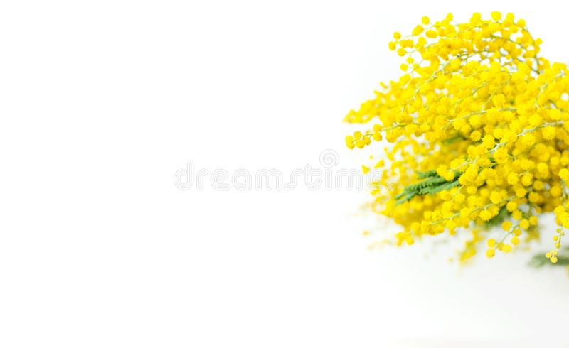 Spring bouquet of yellow mimosa flowers in turquoise vase against the light wall copy space. Gentle composition, concept of spring. Season, symbol of 8 March royalty free stock photography