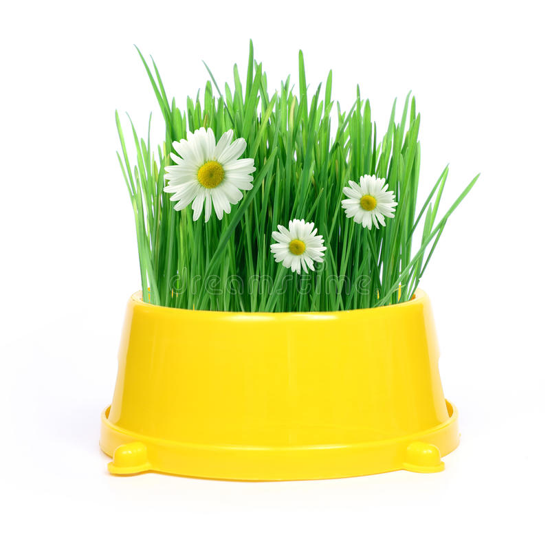 Spring in a bowl stock images