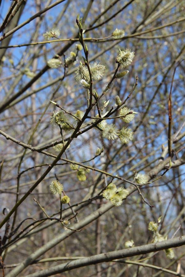 Spring branch Весенняя ветка stock photos