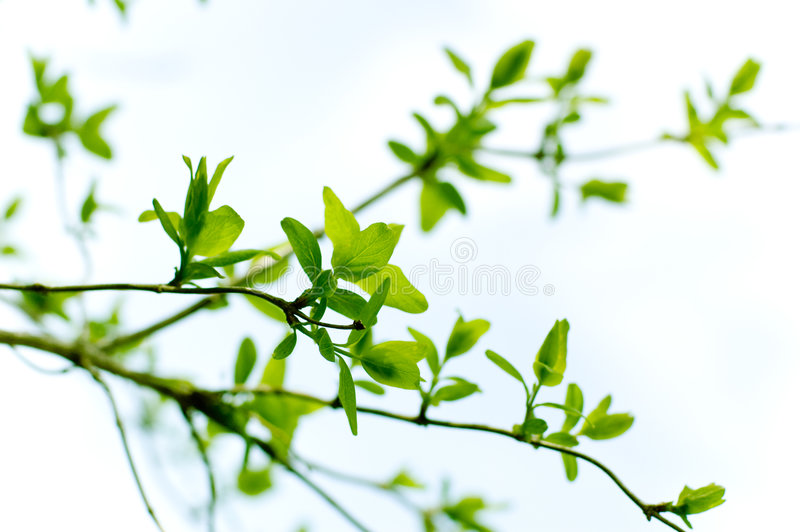 Spring branch royalty free stock photo
