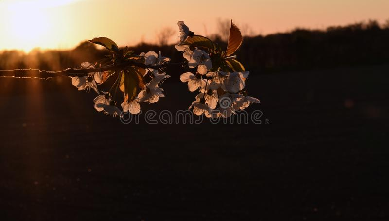 Spring Branch. Scenic spring branch at sunset royalty free stock photo