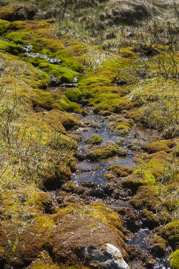 Spring Brook. Brook trickling through moss covered rocks in early spring in the Rocky Mountains royalty free stock images