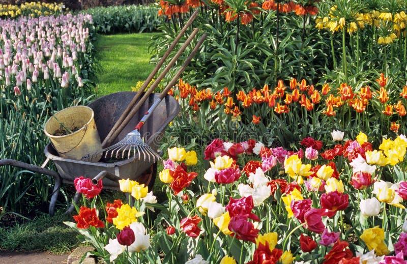 Spring Bulb Gardening stock image