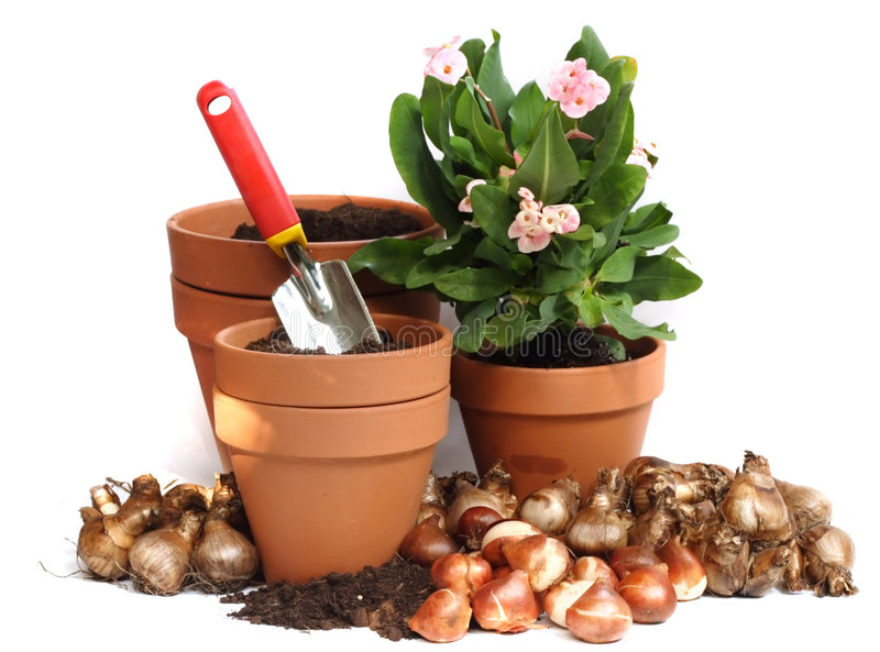 Spring bulbs stock image