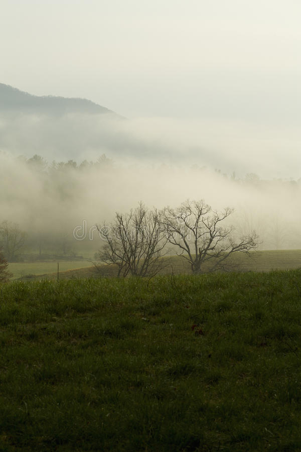 Spring, Cades Cove, Great Smoky Mtns NP, royalty free stock photography