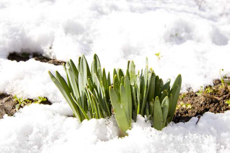 Spring came royalty free stock photography