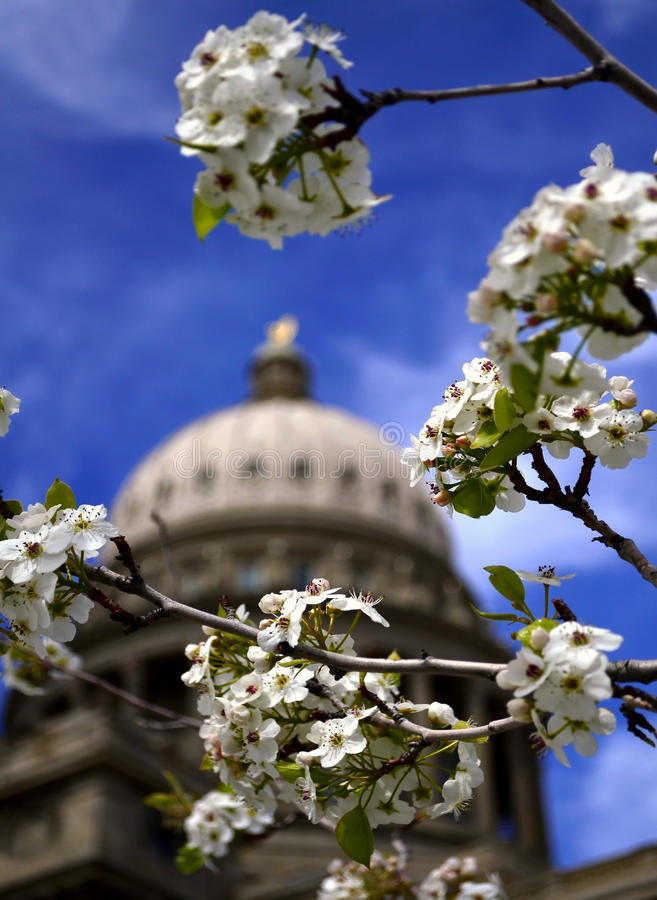 Download Spring at Capital Building stock image. Image of hill - 24251153