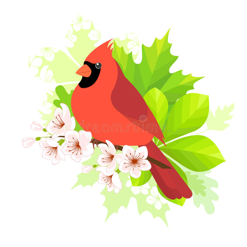 Spring cardinal. Cardinal bird sitting on blossom cherry branch. Spring concept for your design stock illustration