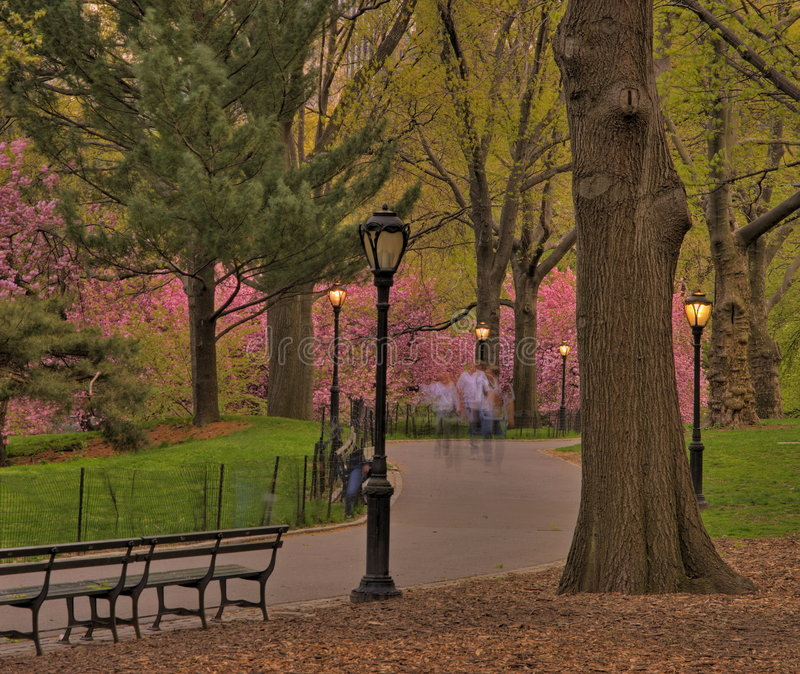 Spring in Central Park. New York at dusk stock images