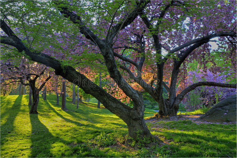 Spring in Central Park royalty free stock images