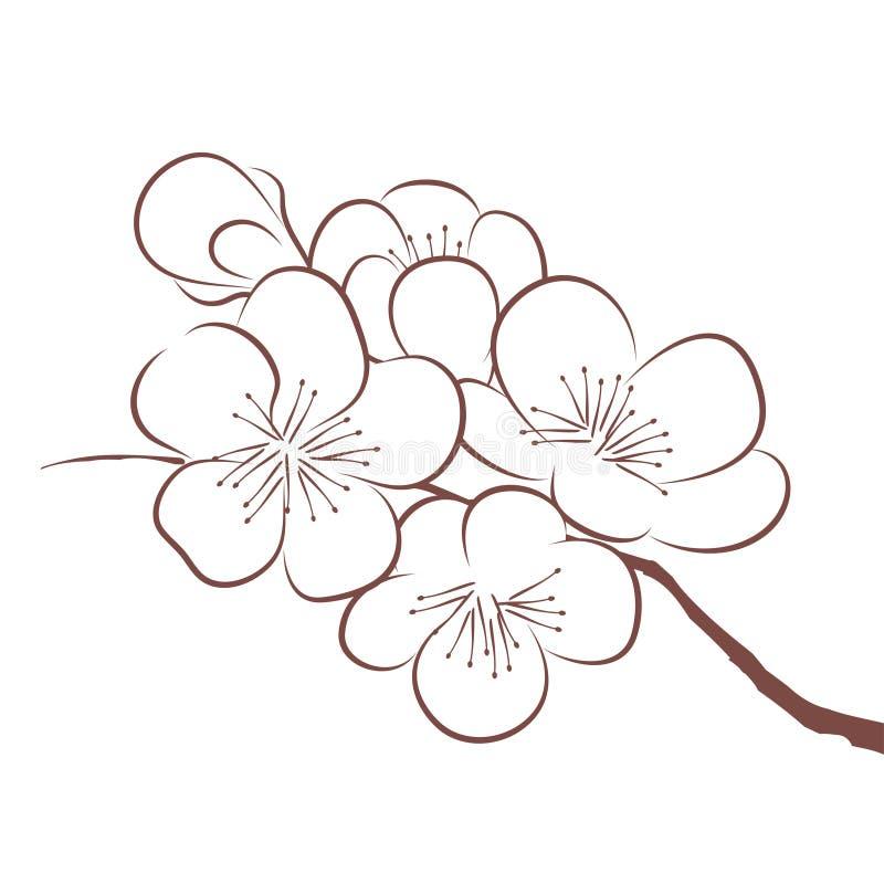 Spring Cherry Blossom Stock Vector Illustration Of