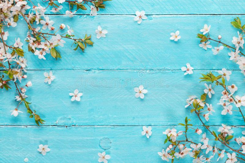 Spring cherry blossom flowers on blue wooden table. top view. flat lay. wedding or mothers background stock photography