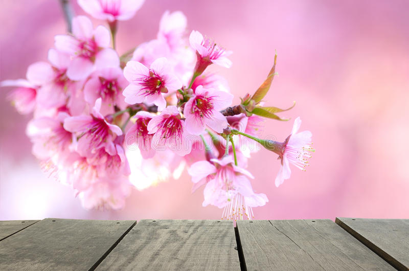 Spring cherry blossom pink flower for background usage.  stock photography