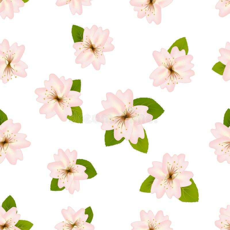 Spring cherry blossoms. Seamless pattern with Japanese sakura. Light pink Flowers on white background. Romantic illustration. vector illustration