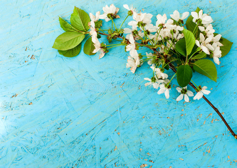 Spring of cherry blossoms on a wooden background stock image