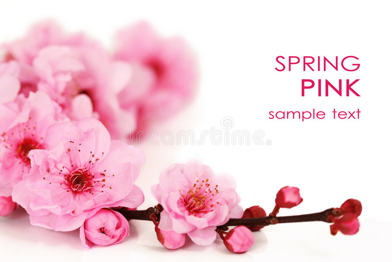 Spring cherry flowers stock photos