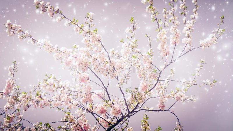 Magic spring royalty free stock images