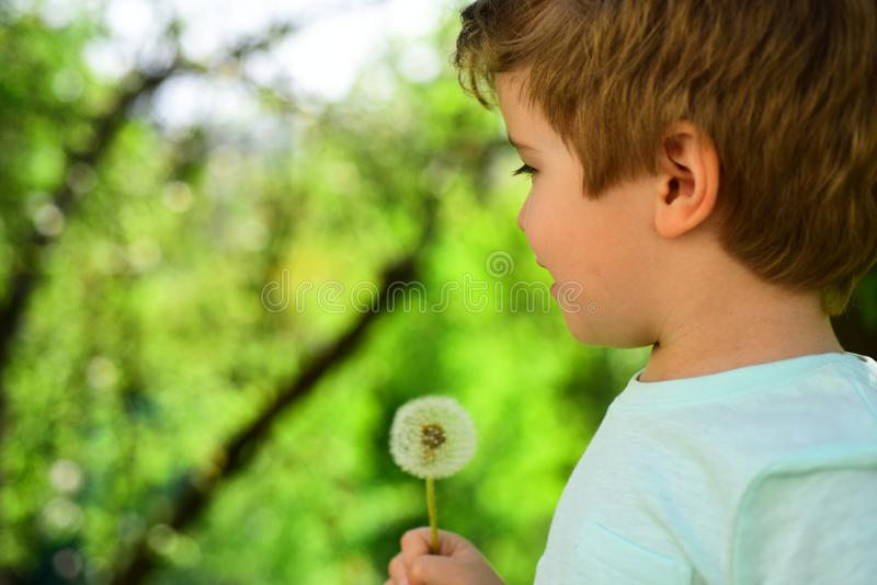 Spring children background. Pollinosis. Dandelion and boy. Spring allergy. Garden and flowers. Spring children background. Pollinosis. Dandelion and boy. Spring royalty free stock photography