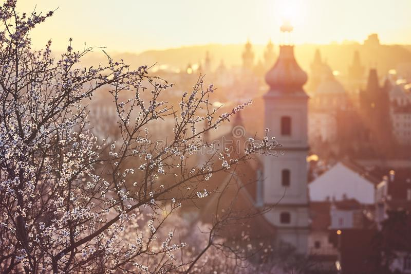 Spring sunrise in Prague. Spring in the city. Blooming trees against old town. Beautiful sunrise in Prague, Czech Republic royalty free stock photos