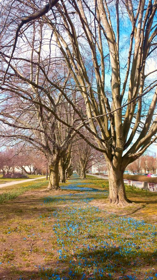 Spring in the city. stock photography