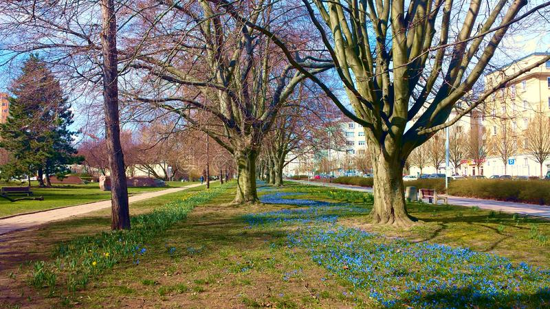 Spring in the city. royalty free stock images
