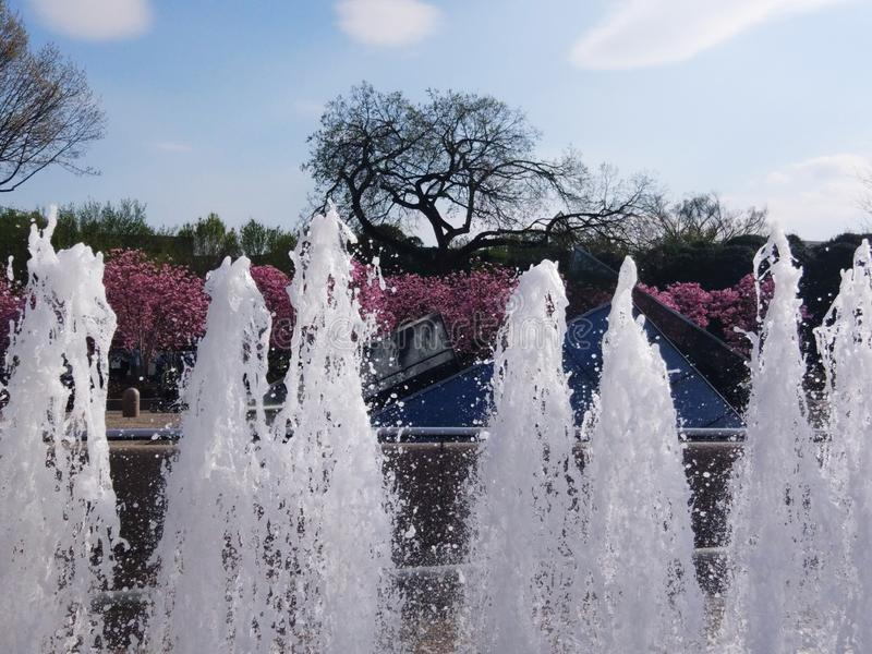 Spring in the city. Spring city fountain water sunny blossoms washington stock photos