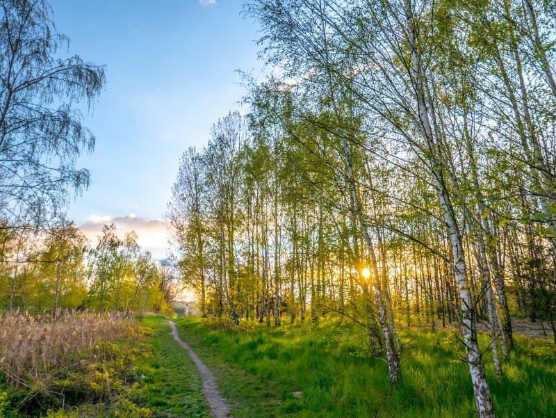 Spring city landscape stock photo
