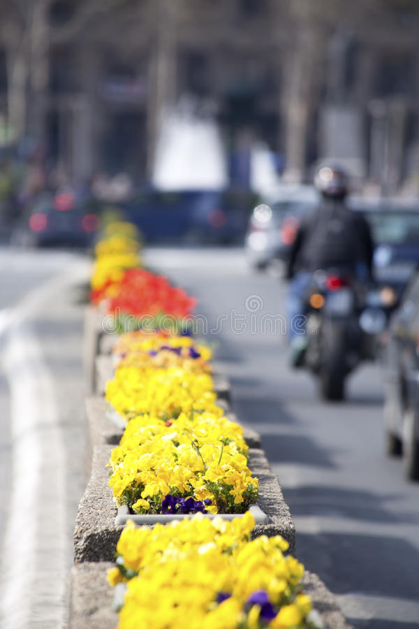 Download Spring in the city stock photo. Image of road, city, backgrounds - 39500788