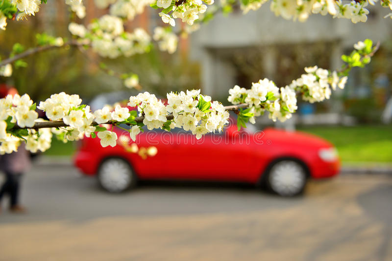 Spring in the city royalty free stock images