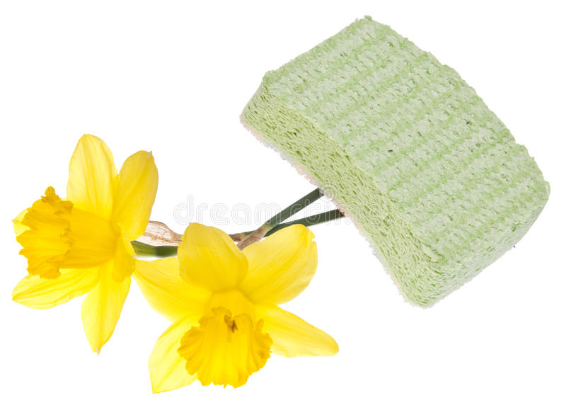 Download Spring Cleaning stock photo. Image of wash, green, clipping - 13481312
