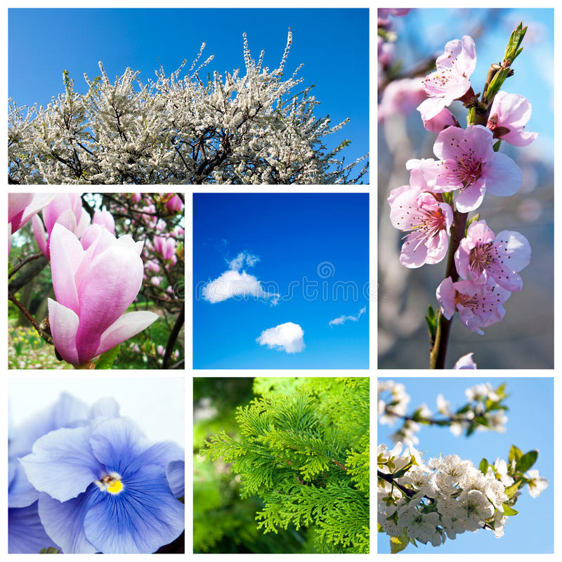 Download Spring collage stock image. Image of harmony, different - 24244715