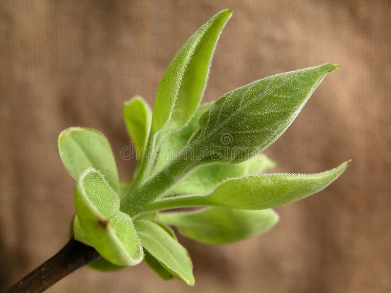 Download Spring collection stock photo. Image of bloom, abloom, springtime - 110594