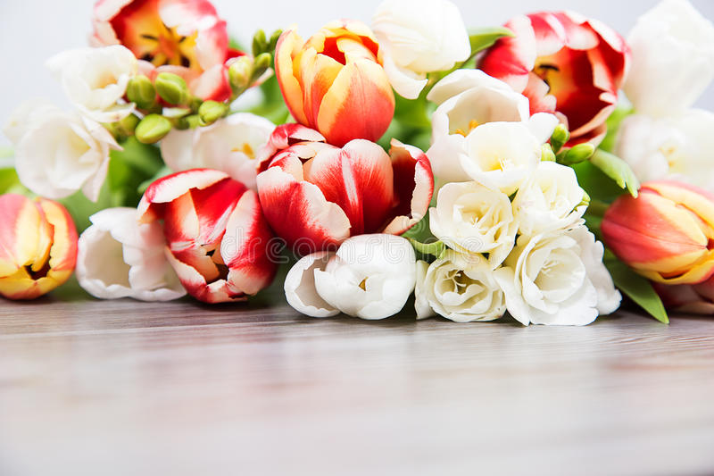 Spring colored flower stock photos