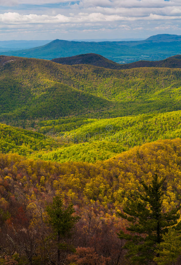 Spring colors in the Appalachians,in Shenandoah National Park, Virginia. Spring colors in the Appalachians, seen from Blackrock Summit in Shenandoah National stock photo