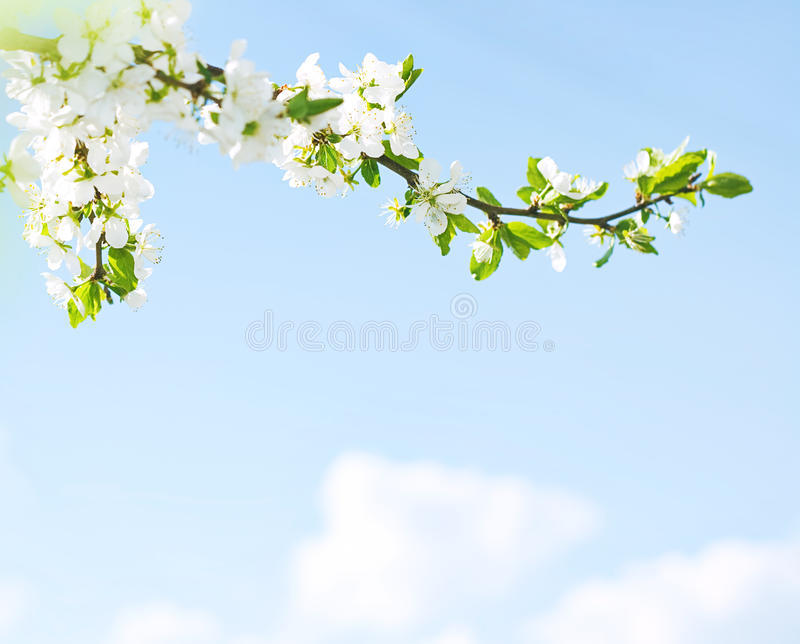Spring come back! stock images