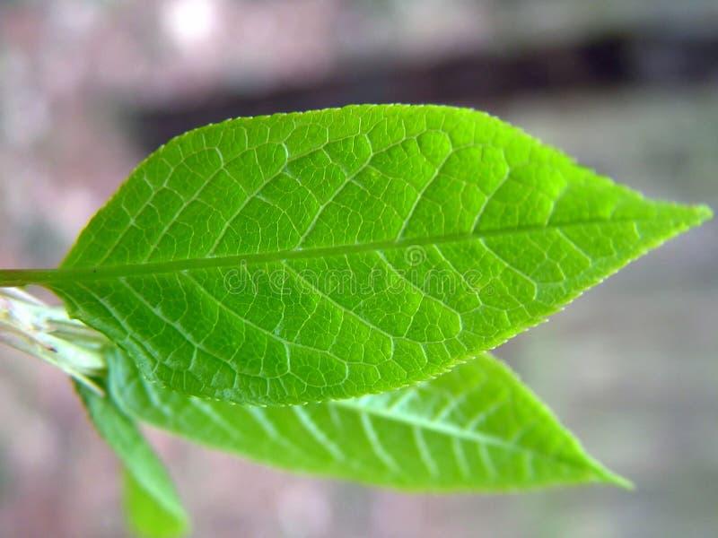 Download Spring comes stock image. Image of details, leaf, forth - 113135