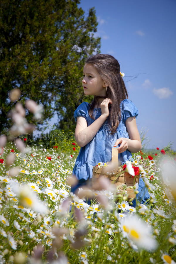 Spring Comes Royalty Free Stock Photo