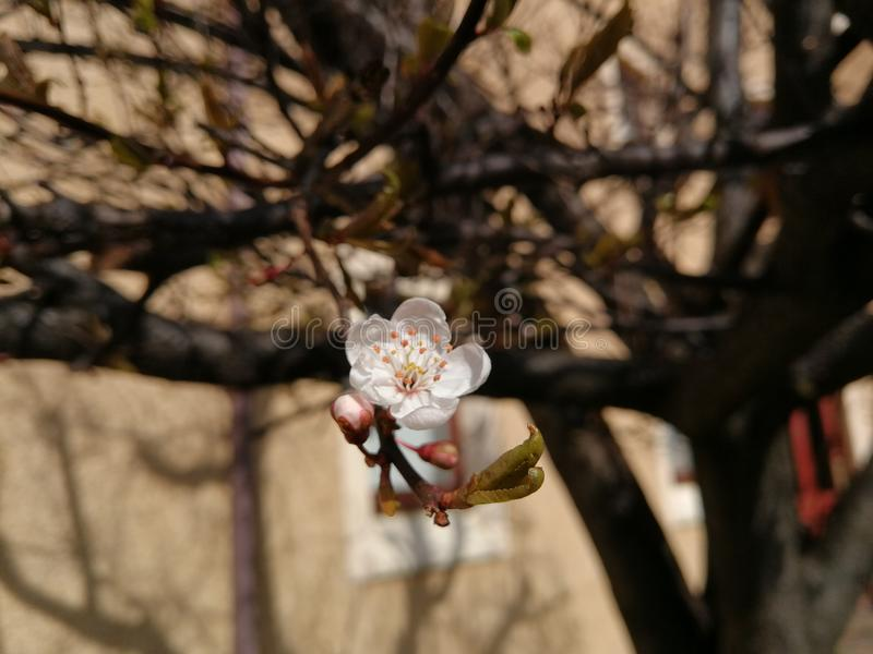 Little flower. Spring is coming soon royalty free stock image