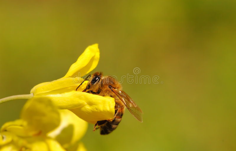 Download Spring concept stock photo. Image of stinging, honey, insect - 3529456