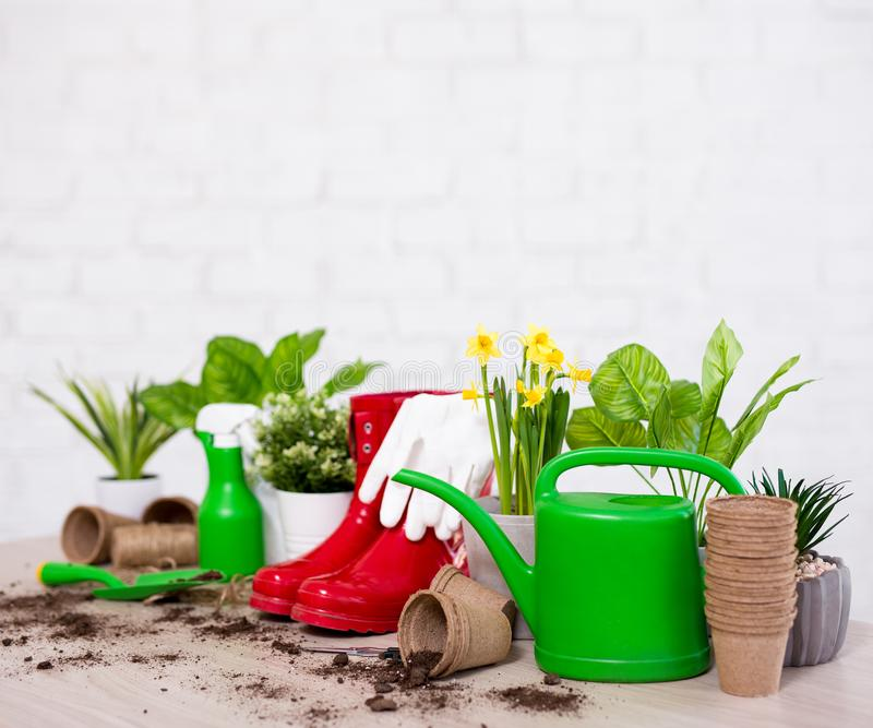 Spring concept - close up of potted plants and gardening tools on wooden table over white wall. Spring concept - close up of potted plants and gardening tools on stock image