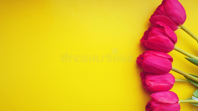 Spring concept. Pink tulips on yellow background. Copy space stock photos